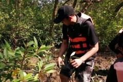 CSRปลูกป่า-บ้านไม้ชายเลนปี2019_191226_0025